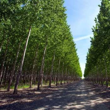 Hybrid Polar Trees